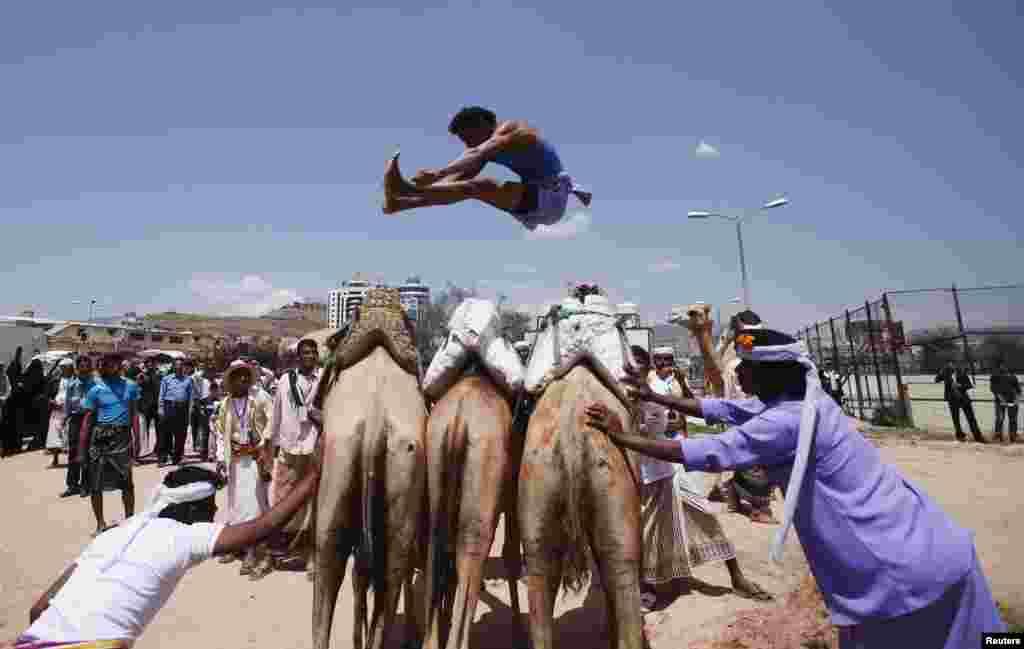 Một người đàn ông Bedouin phi thân qua những con lạc đà trong Lễ hội Mùa hè Sana'a ở thủ đô Sana'a của Yemen. Lễ hội kéo dài 2 tuần này nhằm mục đích kích thích du lịch trong nước và trấn an du khách trong và ngoài nước về sự ổn định của Yemen.