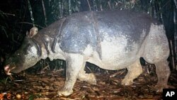 This undated handout photo released by the WWF shows a Javan rhino inside the Nam Cat Tien park in Southern Vietnam. A critically endangered species of rhino has been poached to extinction in Vietnam, wildlife groups said on after the country's last Java
