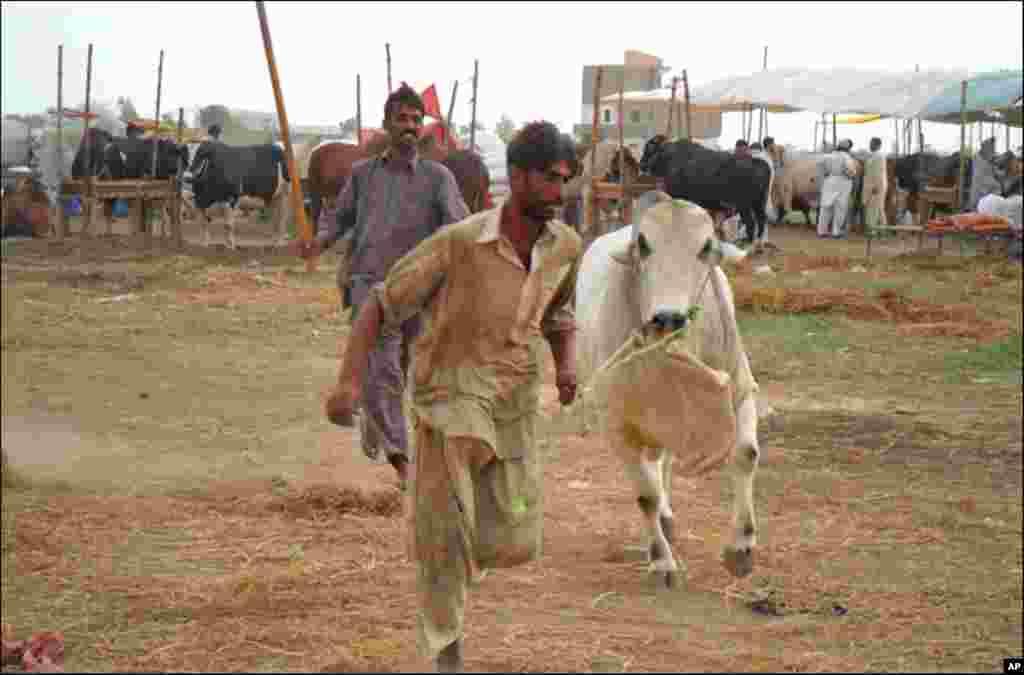 کراچی کی مویشی منڈی