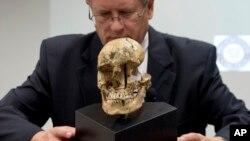 Ông Doug Owsely, trưởng ban Nhân chủng học Thể chất thuộc Bảo tàng Lịch sử Tự nhiên Quốc gia Smithsonian đang trưng bày hộp sọ của cô gái 14 tuổi 'Jane of Jamestown' trong một buổi họp báo, 1/5/2013.
