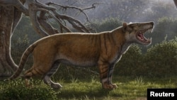 Simbakubwa kutokaafrika, a gigantic mammalian carnivore that lived 22 million years ago in Africa and was larger than a polar bear, is seen in this artist's illustration released in Athens, Ohio, U.S., on April 18, 2019
