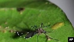 ڈینگی اور ملیریا کی تباہ کاریاں تاحال جاری