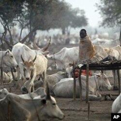 سوڈان کو ریفرینڈم کے بعد نئے چیلنجوں کا سامنا