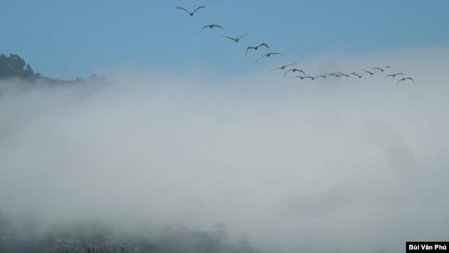 Đàn chim qua màn sương (Ảnh: Bùi Văn Phú)