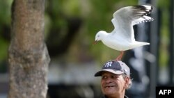 FILE - A man with a seagull on his head smiles at tourists near the harbor in Sydney, April 22, 2014.