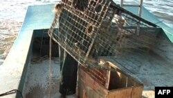 路易斯安那的渔民在近海打开捕蟹器