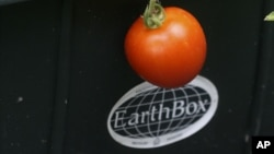 Self-watering containers, like this EarthBox, are great for space deprived gardeners