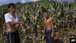 지난 8월 북한 평안남도 성천군에서 홍수로 피해를 입은 옥수수밭. (자료사진)