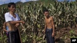 지난 2012년 홍수 피해를 입은 북한 평안남도 성천군 옥수수 밭에서 농부들이 작업 중이다. (자료사진)