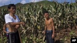 지난 2012년 8월 북한 평안남도 성천군 옥수수 밭이 홍수 피해를 입었다. (자료사진)
