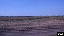 俄羅斯主要產糧區,南部克拉斯諾達爾地區的農田。(美國之音白樺)