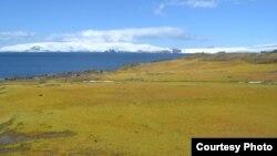 """Menurut para ilmuwan Benua Antartika semakin """"hijau"""" akibat lapisan es yang terus mencair dengan cepat (foto: ilustrasi)."""