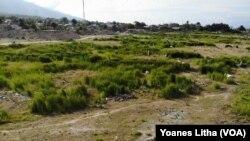 Bagian tanah yang amblas dalam peristiwa likuifaksi 28 September 2018 di Kelurahan Balaroa, Palu Barat, Kota Palu dimanfaatkan warga sebagai lokasi pengembalaan ternak sapi, 25 Juli 2019. (Foto: Terkini.com/Yoanes Litha)
