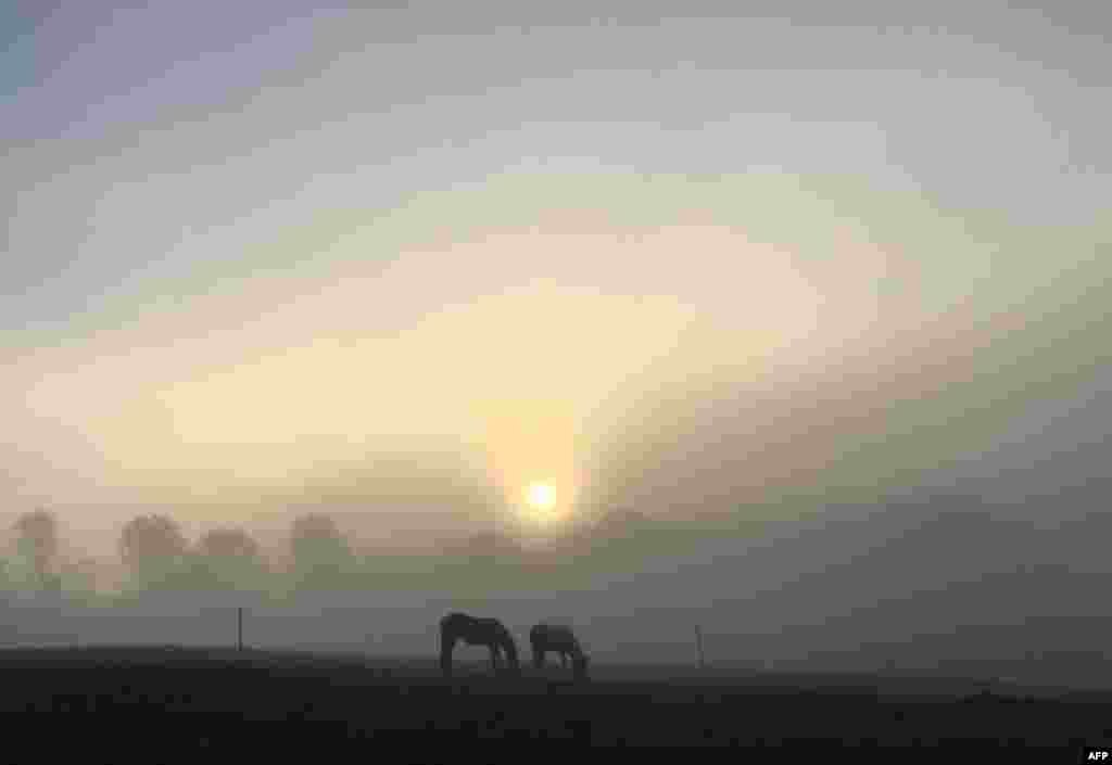 طلوع آفتاب در صبح مه آلود آلمان