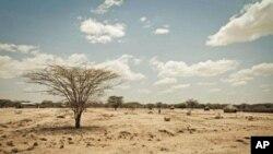 肯尼亚图尔卡纳地区受到干旱严重