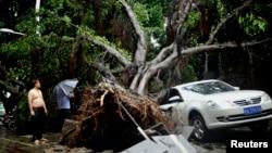 Sebuah pohon tumbang menimpa sebuah mobil setelah topan Matmo melanda Fuzhou, Fujian, China, Rabu (23/7).