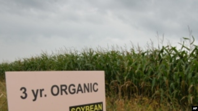 A new study shows organic crops typically yield less than those raised with artificial fertilizers and pesticides.