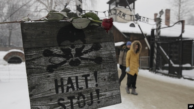 "A rose is placed on top of a sign that reads ""Stop"" with a skull painted, near the gate at the concentration camp during a ceremony marking the 68th anniversary of the liberation of the Auschwitz and to remember the victims of the Holocaust, in Oswiecim,"