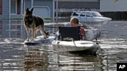 Las inundaciones causaron la muerte de aproximadamente 3,4 millones de pollos y 5.500 cerdos.(Foto deTropical Weather Animal Rescue)