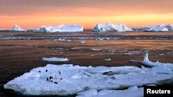 Des pingouins sont installés sur une banquise, près de la station française de Dumont d'Urville, dans l'est de l'Antarctique, le 22 janvier 2010.