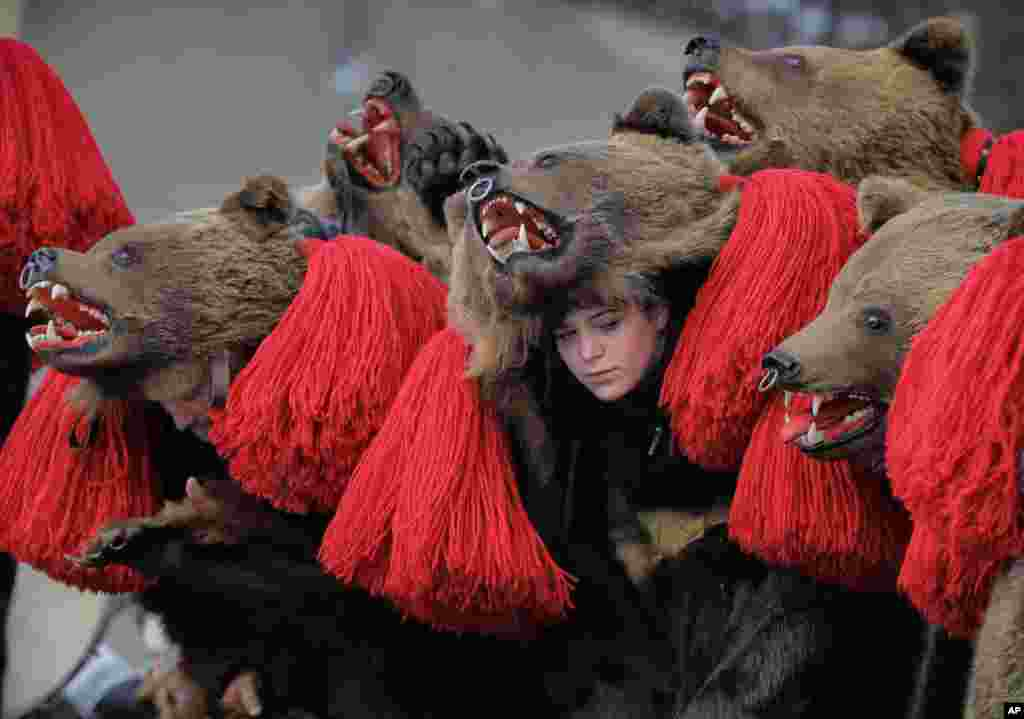 Para penari berkostum bulu beruang, berdansa dalam pertemuan ritual beruang tahunan di Comanesti, Rumania.