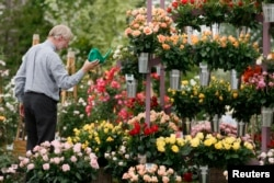 It takes a green thumb to grow beautiful roses like the ones pictured at the Chelsea Flower Show in London May 2014. (REUTERS/Stefan Wermuth)