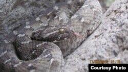 Les habitants des villages isolées sont ceux qui ont le plus de difficulté à faire soigner des morsures de serpent
