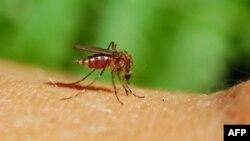 专家说森林砍伐与疟疾的蔓延有关