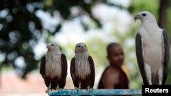 Seorang pendeta berjalan melewati burung elang di kebun binatang Rangoon, Myanmar (Foto: dok).