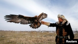 Being able to train eagles is a feather in this man's cap. Arman Kushkarov trains a golden eagle outside of the village of Shamalgan, in Almaty region, Kazakhstan, December 14, 2016. (REUTERS/Shamil Zhumatov)