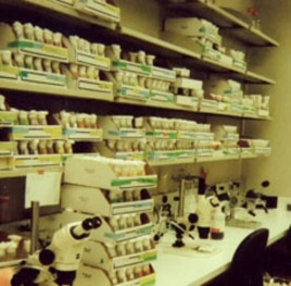 Each vial in the storeroom can hold more than 150 flies.