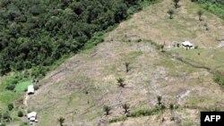 Тропический лес в Колумбии