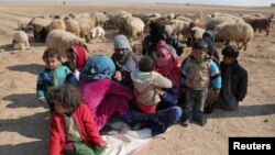 Internally displaced Syrians who fled Raqqa rest near a flock of sheep in the northern Raqqa province, Feb. 6, 2017.