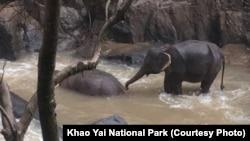 ڈروں سے حاصل ہونے والی تصویر سے حادثے میں بچ جانے والا ایک زندہ ہاتھی دکھائی دے رہا ہے۔ جب کہ ایک ڈوب جانے والا ہاتھی بھی نظر آ رہا ہے۔