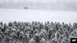 Sebuah mobil jeep di tengah peternakan di Blair, Nebraska yang dilanda salju (24/2).