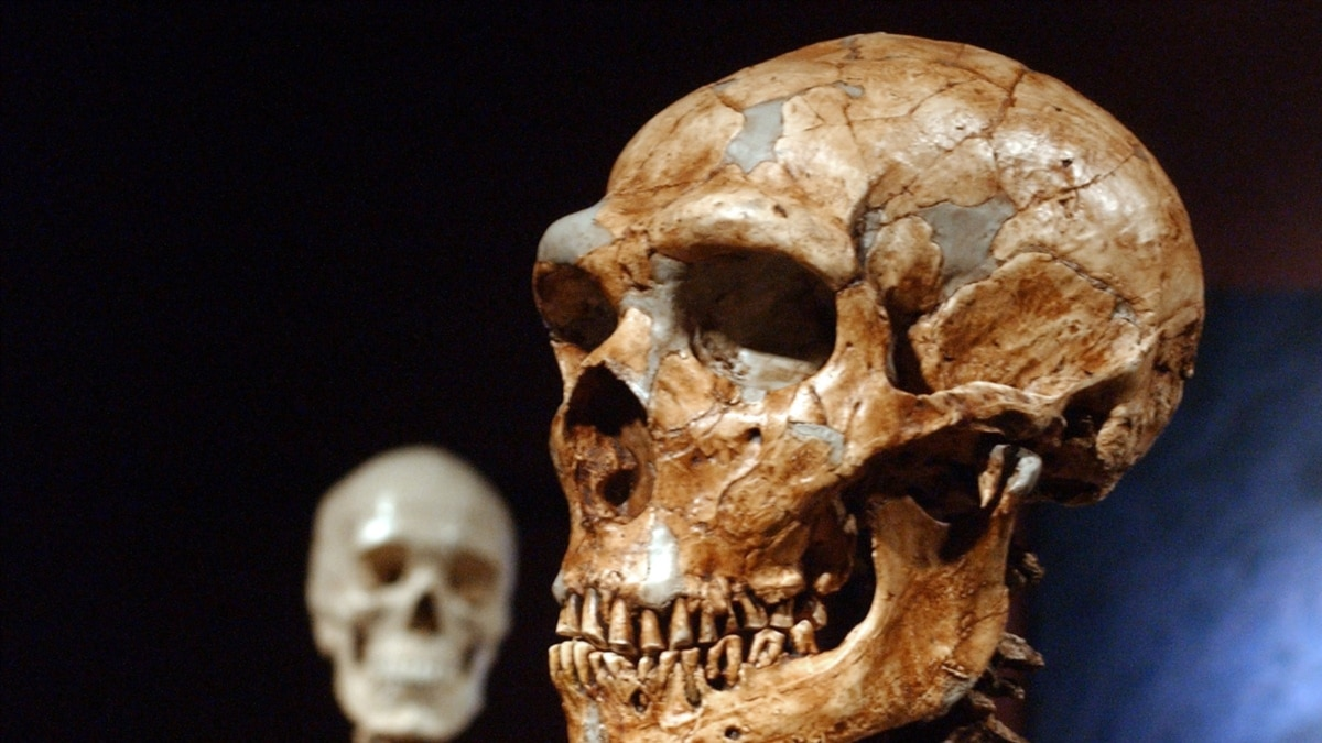 Fosil Manusia Purba Ungkap Informasi Baru Soal Evolusi