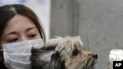 A woman holds her dog as they are scanned for radiation at a temporary scanning center for residents living close to the quake-damaged Fukushima Dai-ichi nuclear power plant in Japan, March 16, 2011.