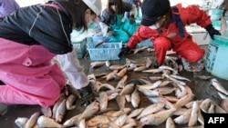 Cá bán trong khu chợ Kitaibaraki trong quận Ibaraki, nằm về hướng nam khu nhà máy điện hạt nhân ở Fukushima, Nhật Bản