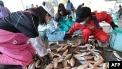 Warga Jepang memilih ikan di pasar ikan Hirakata di Kitaibaraki, wilayah Ibaraki, selatan pembangkit listrik tenaga nuklir Fukushima (Foto: dok). Para pakar kimia laut mengungkapkan adanya kandungan radioaktif dalam ikan di perairan lepas pantai Fukushima.