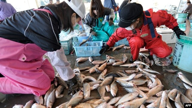 Japanese women sort through freshly caught fish at the Hirakata fish market in Kitaibaraki, Ibaraki prefecture, south of the stricken Fukushima daiichi nuclear power plant number 1, April 6, 2011.