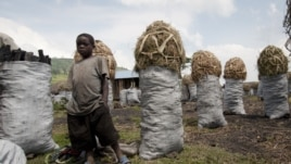 A Congolese boy at a charcoal market close to the town of Kitschoro. Charcoal is one of the main businesses in the area and many children have to work to support their families instead of going to school, the Democratic Republic of the Congo. (UNESCO/M. H