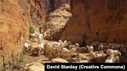 La réserve d'Ennedi au Tchad, le 29 octobre 2015. (CC/David Stanley)