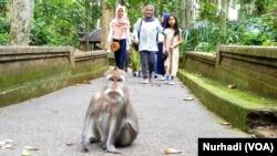 Seekor monyet di kawasan Hutan Lindung Sangeh, Bali, Desember 2019. (Foto:VOA/ Nurhadi)