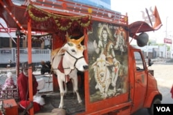 """A special """"rath"""" or chariot-car of a Hindu group campaigning against cow slaughter for Eid is seen in Kolkata, October 6, 2014. (Photo by - Shaikh Azizur Rahman/VOA)"""