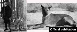 Ảnh chụp chó Phú Quốc được in trong sách 'Animal Life and the World of Nature'