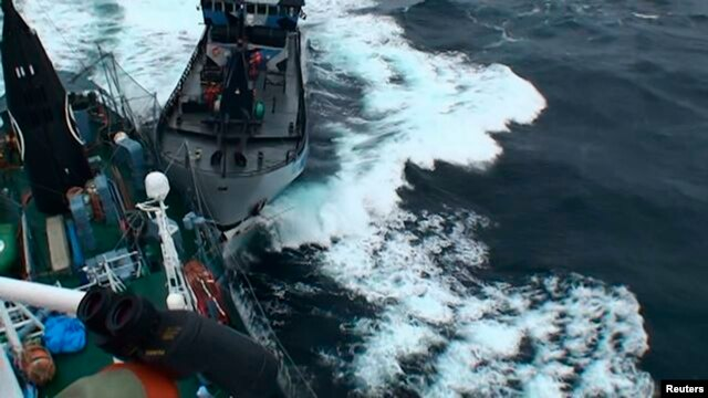 Sea Shepherd vessel 'The Bob Barker' is pictured in contact with the port side stern of Japanese whaling ship Yushin Maru in the Southern Ocean, Feb. 2, 2014.