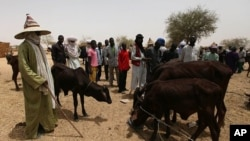 Nomads look on as hungry cattle are fed in a local market in Dakoro, Niger (File Photo).
