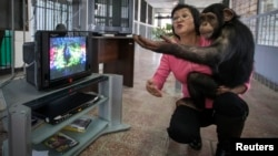 FILE - Zoo staff Sholpan Abdibekova and Tomiris, a five-year-old chimpanzee, react as they watch a BBC environmental program in a primate winter enclosure in Almaty, Kazakhstan, March 6, 2015.