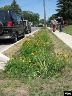 The Maywood Avenue bioswales project in Toledo, Ohio, is designed to protect nearby houses from flooding. (E. Celeste/VOA)