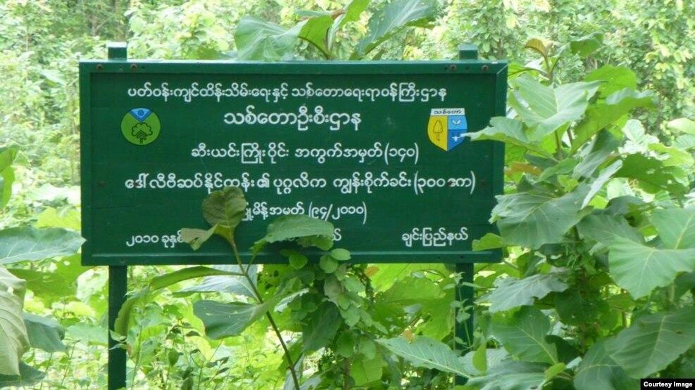 ဆီးယင္းသစ္ေတာႀကိဳး၀ိုင္း ပုဂၢလိက ကၽြန္းစိုက္ခင္းတစ္ခု /၂၇-၈-၂၀၁၅ (ဓါတ္ပံု-Maung Maung Lwin)